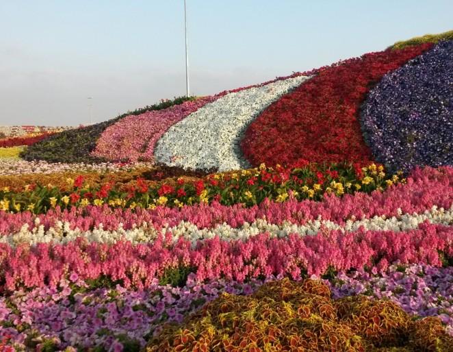 Dubai Miracle Gardens, Phase 2